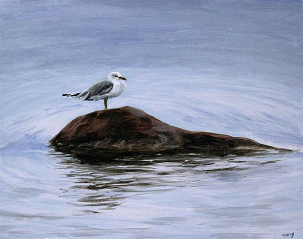 Seagull from Killbear